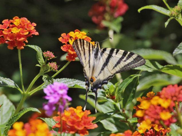 Handmade Miracle―Botanical Park of Crete
