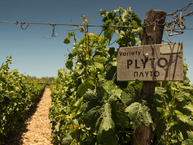 Crete: a place with a wine history of more than 4000 years!